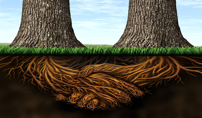Get rooted
